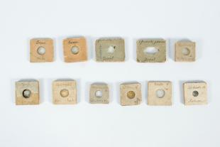 birefringent specimens mounted on square cork slides