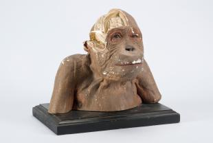 model of the head of an orangutan with brain exposed on the side