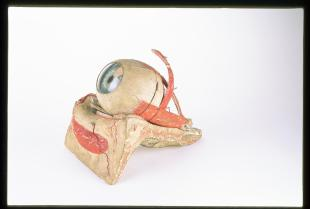 clastic model of the eye